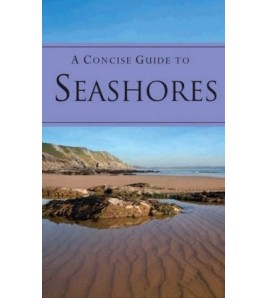 A Concise Guide To Seashores