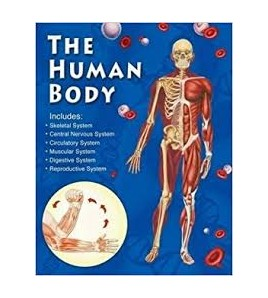 The Human Body A Journey of...