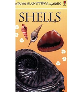 Shells (Spotter's Guides)