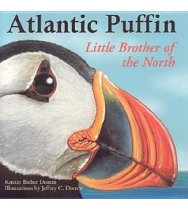 Atlantic Puffin - Little...