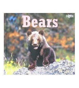 All about animals Bears